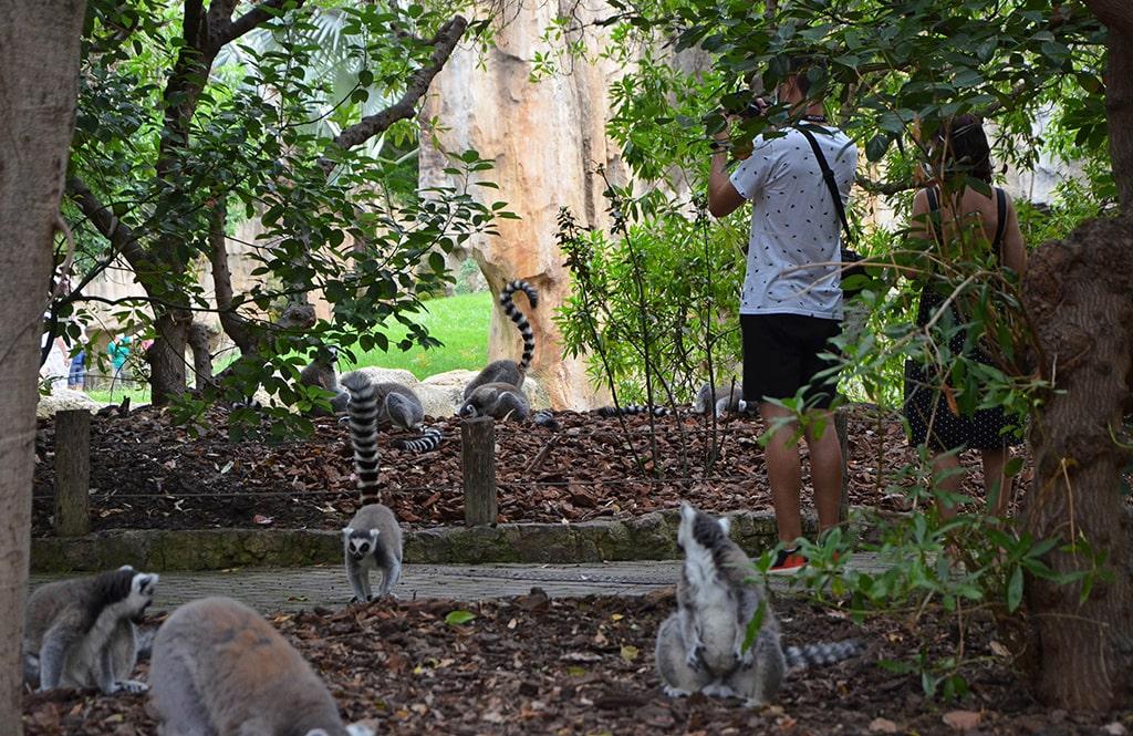 Isla de Madagascar durante la reapertura de BIOPARC Valencia