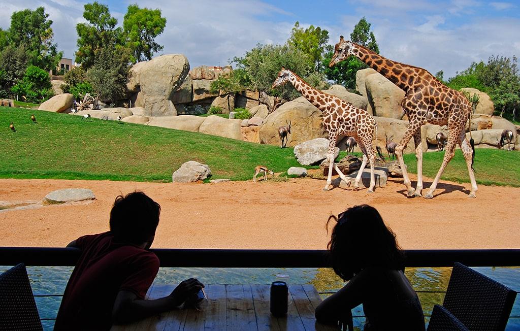 Comer observando a las jirafas en BIOPARC Valencia