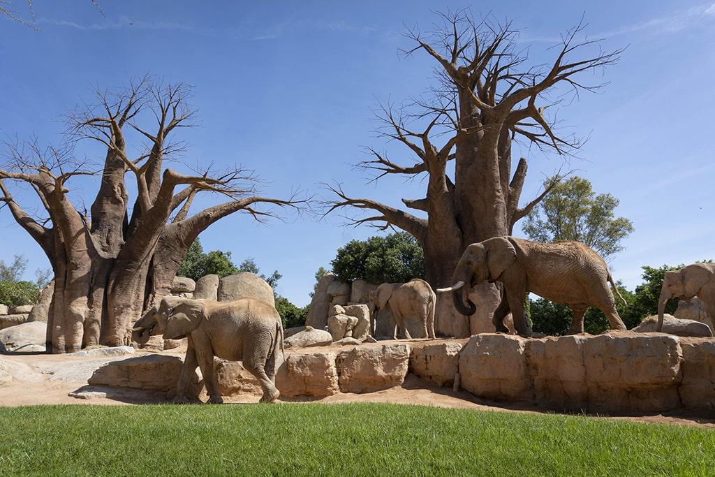 BIOPARC Valencia por la naturaleza en el día del medioambiente