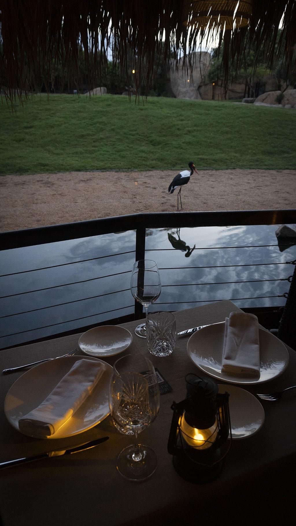 Espectacular entorno de Las Cenas en la Sabana de BIOPARC Valencia