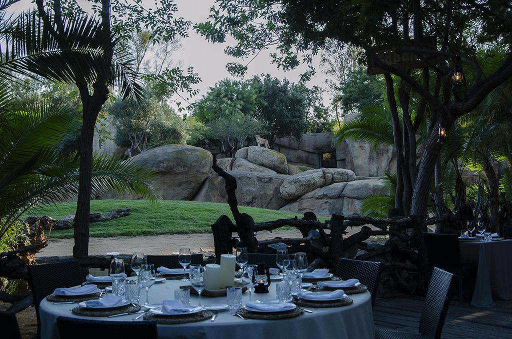 Cenas en la Sabana, leona en el Kopje BIOPARC Valencia