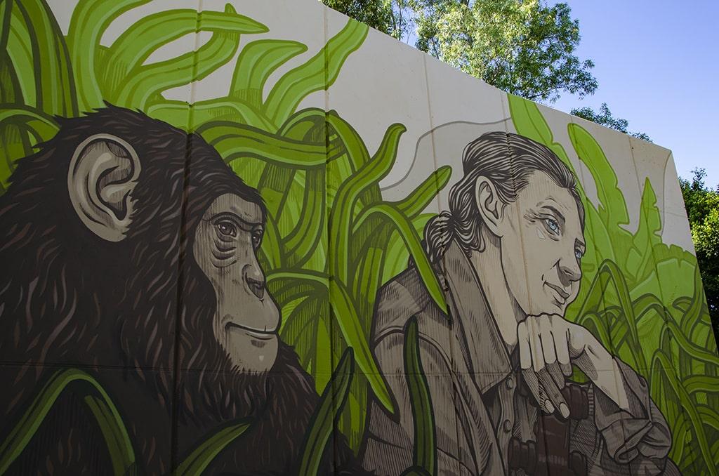 Mural de Jane Goodall en BIOPARC Valencia