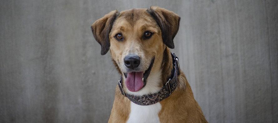 Desfile virtual de perros abandonados AUPA y BIOPARC