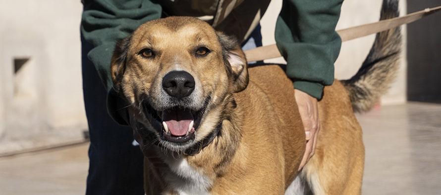 Momentos del 17 desfile solidario de perros abandonados AUPA y BIOPARC