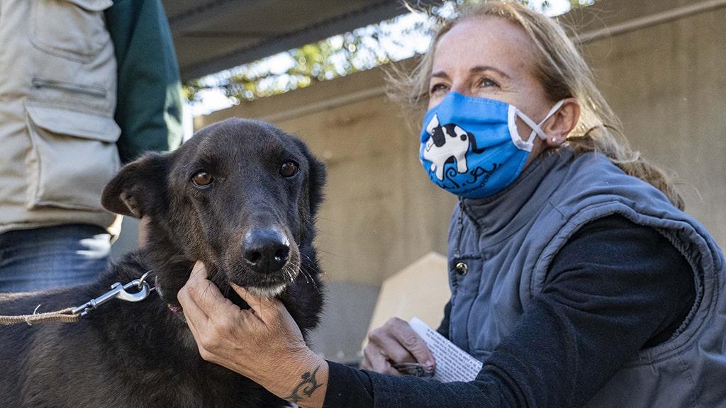 Momento del 17 desfile de perros abandonados AUPA y BIOPARC