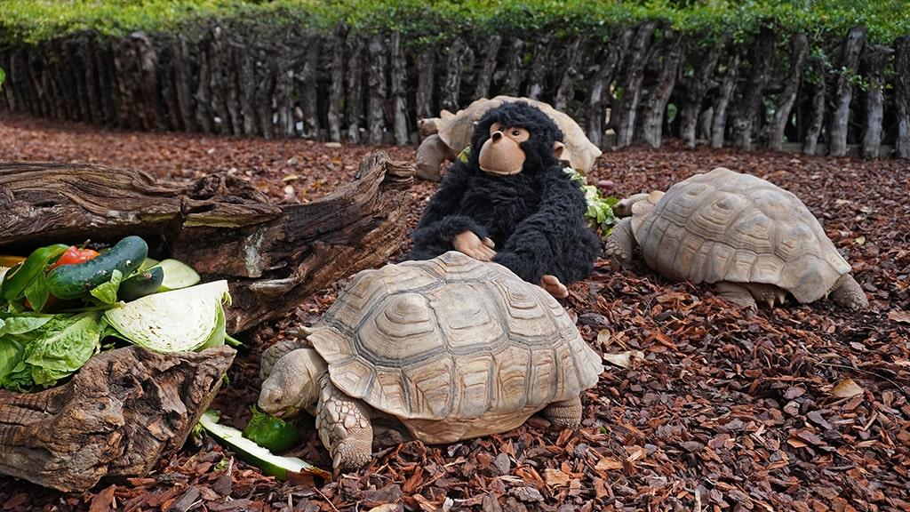 La mascota Gombe junto a las tortugas
