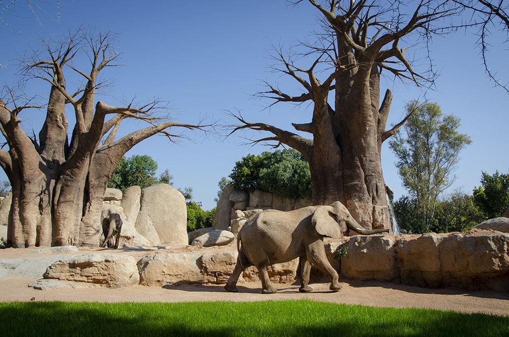 Propuesta educativa de BIOPARC Valencia un aula de naturaleza salvaje