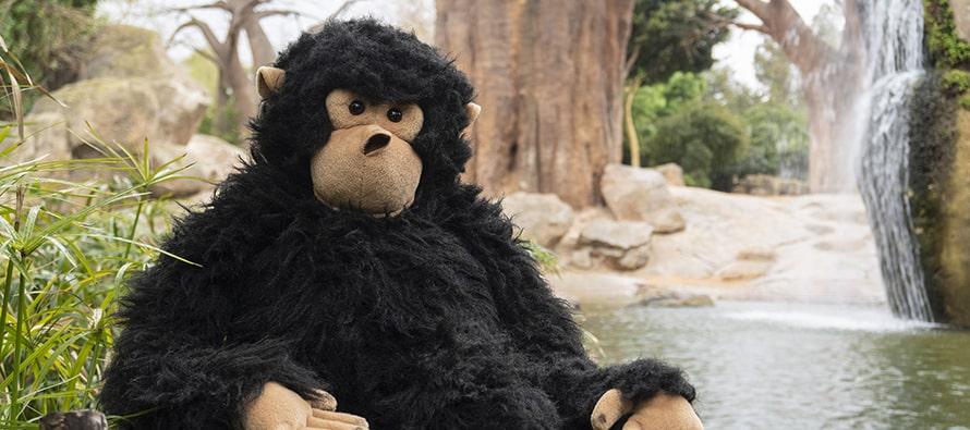 La mascota Gombe de BIOPARC Valencia
