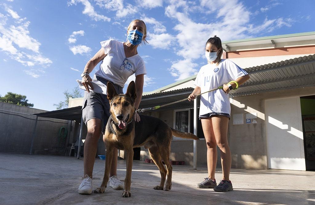 El 18 Desfile virtual de perros abandonados de AUPA y BIOPARC Valencia llega a miles de personas