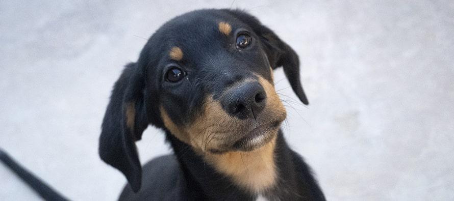 El 18 Desfile virtual de perros abandonados de A.U.P.A y BIOPARC Valencia llega a miles de personas