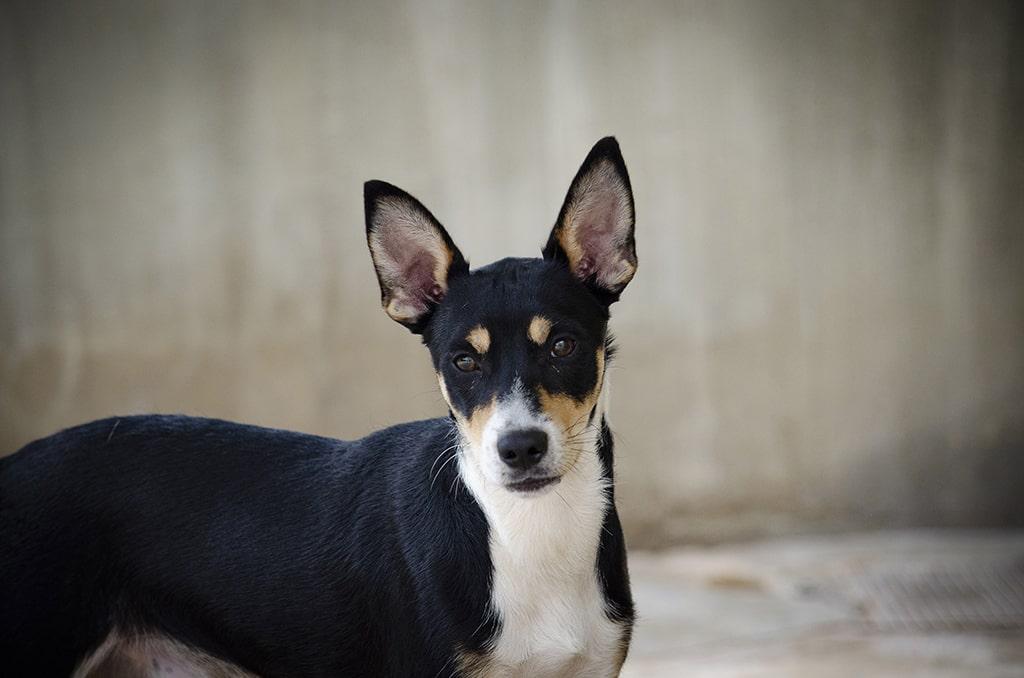 Uno de los perros protagonistas del 18 desfile AUPA y BIOPARC para fomentar las adopciones